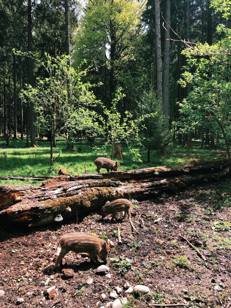 Walderlebnispfad Sauschütt Ebersberger Forst